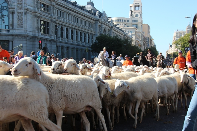 Madryt - Święto przepędzania trzody