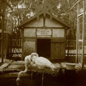 Retiro zoo